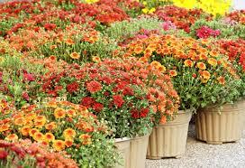 flower pot sale flower pot images u0026 stock pictures royalty free flower pot photos