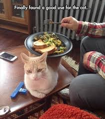 Cute Pet Memes - top 30 funny animal memes and quotes quotes and humor