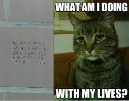 Depressed Cat Meme - depressed cat