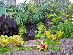 Garden Pictures Ideas Backyard Small Tropical Plants Sun Tropical Courtyard