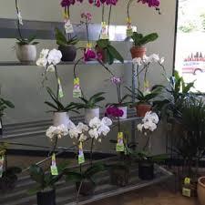 Austin Tx Flower Shops - freytag u0027s florist 58 photos u0026 143 reviews florists 2211 w