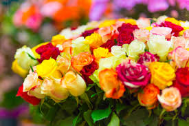 multicolor roses 5 reasons to choose roses fiftyflowers the