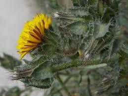 british native plants british plants with yellow