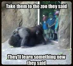 Funny Sex Jokes Memes - take them to the zoo they said meme