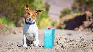 Traveling With Pets images Travel with pets jpg