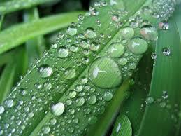 free raindrops on leaf stock photo freeimages com