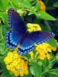 best 25 beautiful butterflies ideas on butterflies