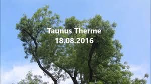 Taunus Therme Bad Homburg Kater Fuxi Taunus Therme 18 08 2016 Youtube
