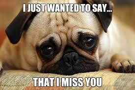 Miss You Meme - i just wanted to say that i miss you sad pug quickmeme