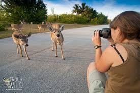 Florida wildlife tours images Truly wild tours glades keys manatees florida wildlife truly jpg