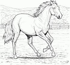 animal pony horse coloring pages horse coloring sheets free
