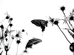 black and white nature background clipart clipground