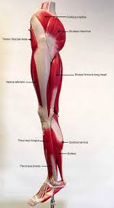 Anatomy Of Human Body Pdf Biol 160 Human Anatomy And Physiology