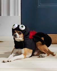 human dog costumes for halloween matching owner and dog costumes for a pet rifyingly cute halloween