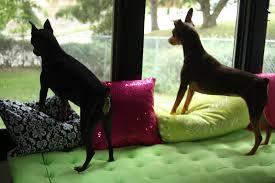 if it u0027s not baroque ikea hack malm dresser window seat for dogs