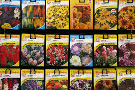 seed packets file seed packets jpg wikimedia commons