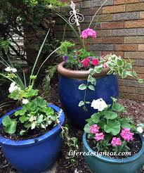 no fail flower container gardens for beginners life redesign 101