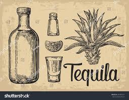vintage cocktail vector glass bottle tequila cactus salt lime stock vector 397983514