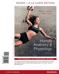 Human Anatomy And Physiology Study Guide Pdf Human Anatomy Physiology Th Edit Guide Human Anatomy And