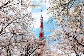 Cherry Blossom Map 2016 Tokyo Cherry Blossom Tours For Muslim Halal Media Japan