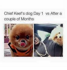 Dog Meme Generator - chief keef s dog day 1 vs after a couple of months meme on me me