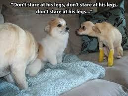 Oh You Dog Meme - i has a hotdog cast funny dog pictures dog memes puppy