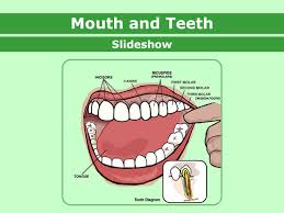 mouthandteeth enss 1 jpg