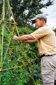 How To Build A Trellis How To Build A Bamboo Trellis Tower Bonnie Plants