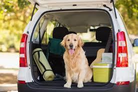 porta cani per auto 6 consigli per scegliere la miglior macchina per trasportare il