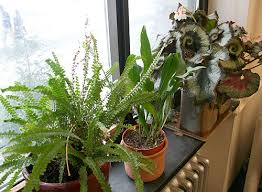 my name is craig and i have a houseplant problem u2013 ellis hollow