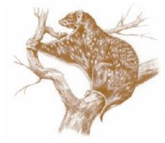 mammiferi volanti dermotteri nell enciclopedia treccani