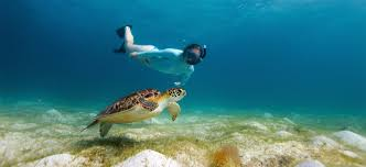 travel tip where to go diving and snorkeling in zanzibar afktravel