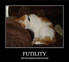 Stupid Cat Meme - file funny pictures cat is stupid jpg uncyclopedia fandom