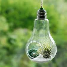 lightbulb air plant hanging terrarium by dingading terrariums