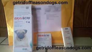 bravecto for dogs reviews rebates coupons youtube