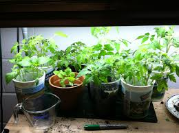 indoor vegetable gardening tips home outdoor decoration