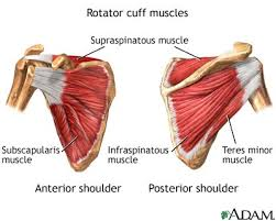Bench Press Shoulder Impingement Can An Osteopath Treat Tendonitis Of The Shoulder Ashley James