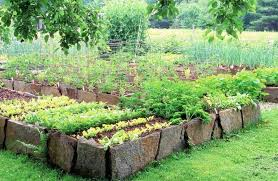 Rock Vegetable Garden Garden Rock Beds Large Size Of Garden Rock Garden Ideas Rock