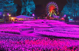 why my family is heading to floriade this spring and you should