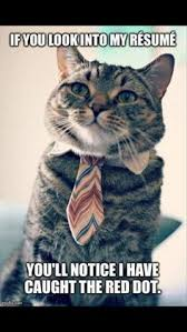 Cat In Suit Meme - owning cat could lead to mental illness international stories on