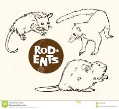 set of rodents animals opossum nosuh and beaver stock vector