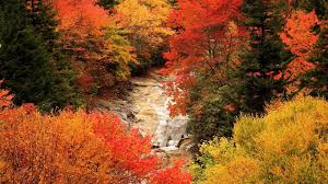 rivers autumn leaves trees nature leaf landscape wallpapers