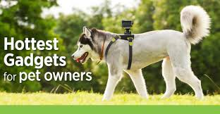 10 hottest gadgets for pet owners