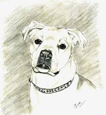 boxer dog drawings fine art america