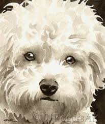 bichon frise fluffy 11 fluffy facts about the bichon frise bichon frise bichons and dog