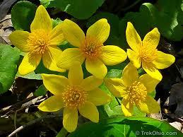 native ohio plants april wildflowers at ohio state nature preserves trekohio