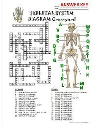 skeletal system crossword with diagram editable by tangstar science
