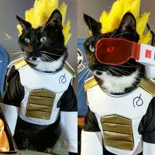 We Re Sorry Meme - cat cosplay of the feline variety ok we get it i formally
