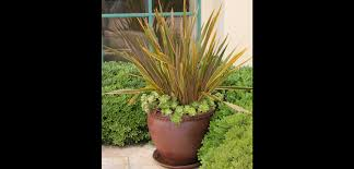 fall plants autumn garden container gardening bombay outdoors