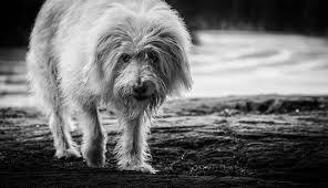 blog u2014 wally u0026 roops pet photography